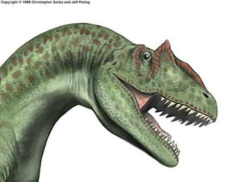 Le dinosaure Allosaurus (Allosaure).