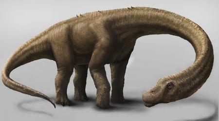 Le dinosaure Dreadnoughtus.