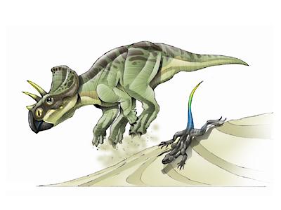 Le dinosaure zuniceratops