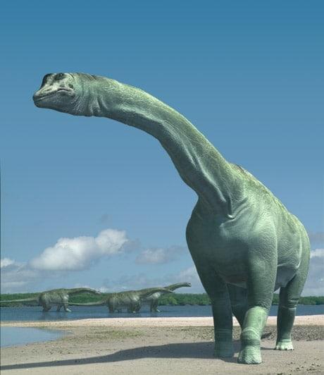 Le dinosaure Paralititan.