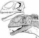 Jobaria et son crâne fossile.