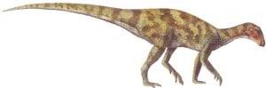Parksosaurus.