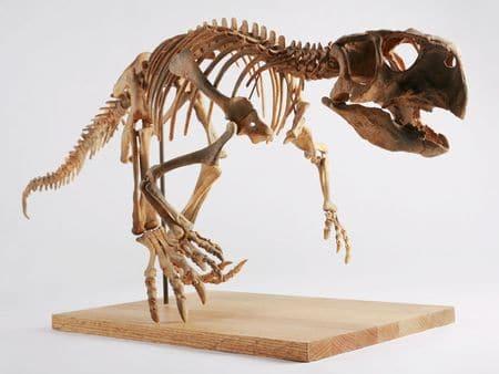 Fossile de Psittacosaurus.