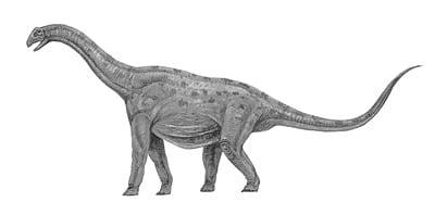 Le dinosaure Jobaria.