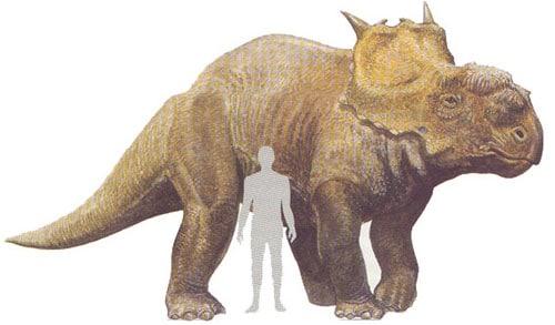 Pachyrhinosaurus.