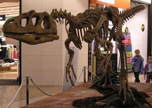 Fossile du dinosaure Piatnitzkysaurus.