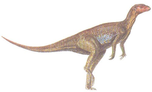 Pisanosaurus.