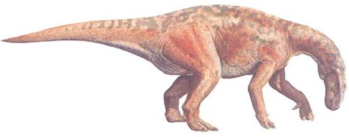 Probactrosaurus.