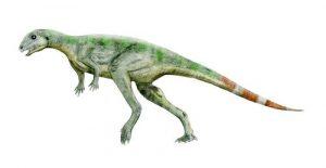 Le dinosaure Pisanosaurus.