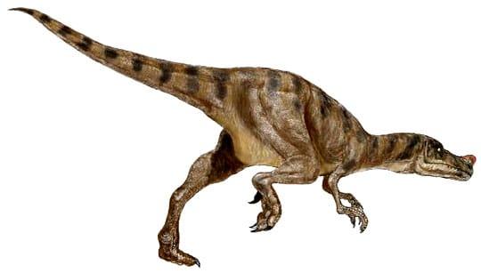 Proceratosaurus.