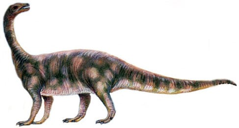 Riojasaurus.