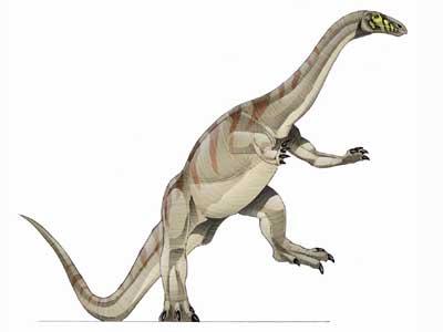 Le dinosaure Riojasaurus.