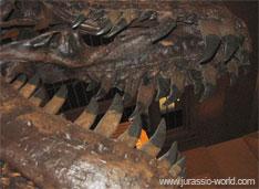 Dents du dinosaure Théropode Tyrannosaure. Carnivores plutôt herbivores : d'autres Théropodes d'abord considérés comme carnivores étaient plutôt herbivores.