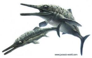 Ichthyosaurus, un reptile marin.