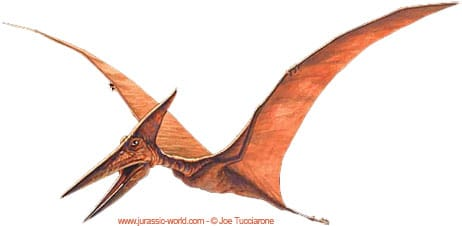 Pteranodon n'était pas un dinosaure : c'était un reptile volant.