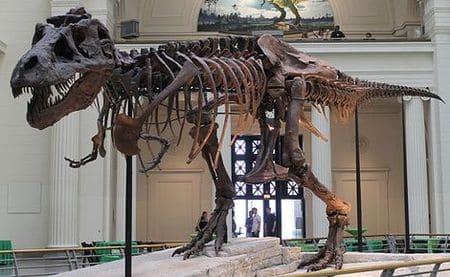 Squelette fossilisé du Tyrannosaure Sue.