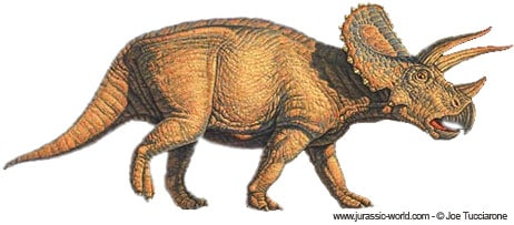Tricératops.
