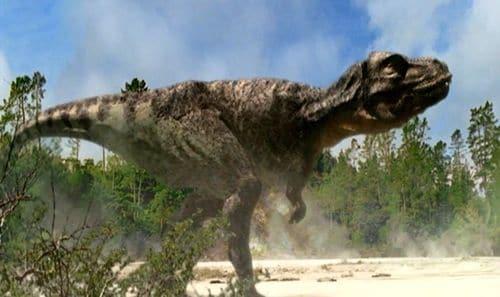 Tyrannosaurus (T. rex) en chasse...
