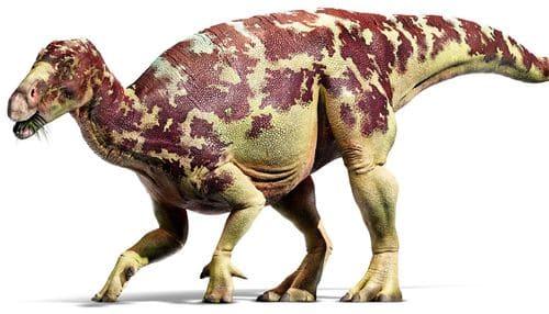 Iguanodon trouvé à Bernissart en Belgique.