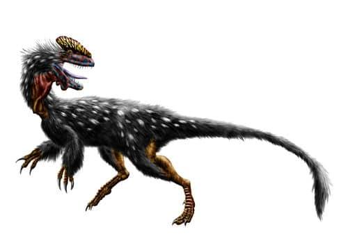 Le dinosaure Guanlong wucaii.