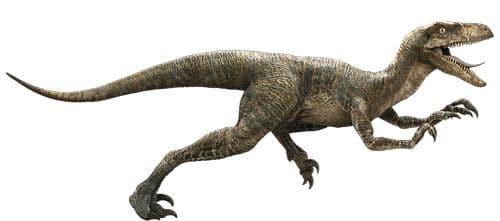 Velociraptor d'un des films Jurassic Park, sans plumes, ce type de représentation est dépassé, mais où et quelle quantité de plumes mettre ?
