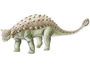 Le dinosaures Ankylosaure avec sa queue en forme de massue.