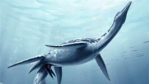 Plésiosaure Polycotylus latippinus donnant naissance à un bébé.