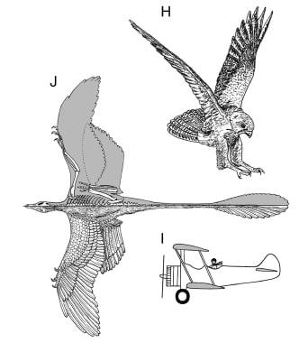 Microraptor et apparition du vol.