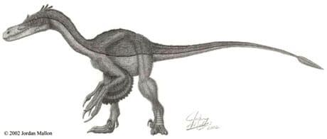 Velociraptor avec des plumes.