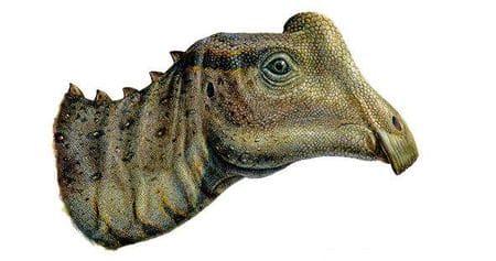 Bébé Parasaurolophus.