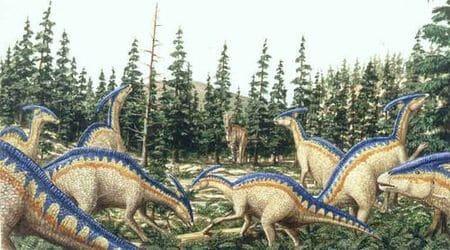 Troupeau de dinosaure Parasaurolophus.