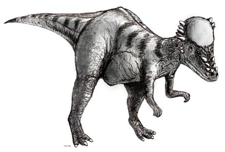 Pachycephalosaure.