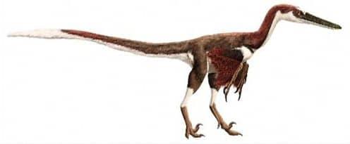 Le dinosaure Austroraptor.