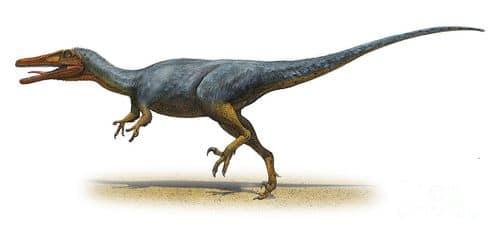 Austroraptor.