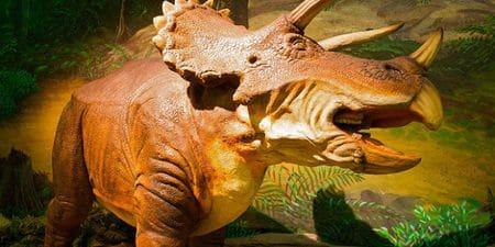 Dinosaure triceratops avec trois cornes.
