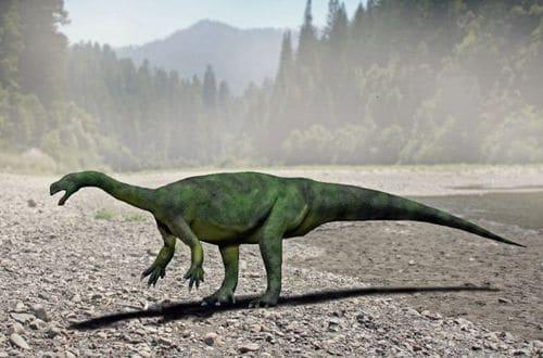 Le dinosaure Aardonyx Celestae.