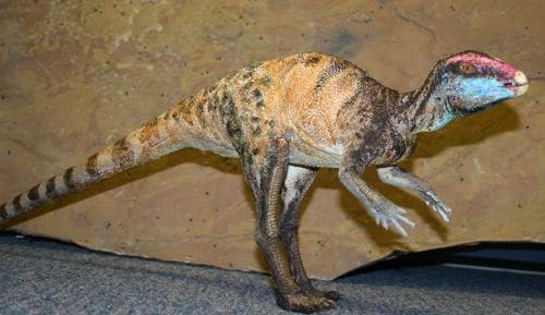 Le dinosaure Fruitadens.