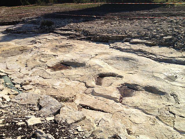 Plagne (Ain) : piste de pas de dinosaure.