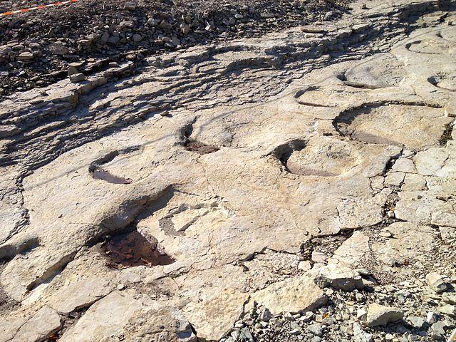 Piste de d'empreintes de pas de dinosaure fossiles.