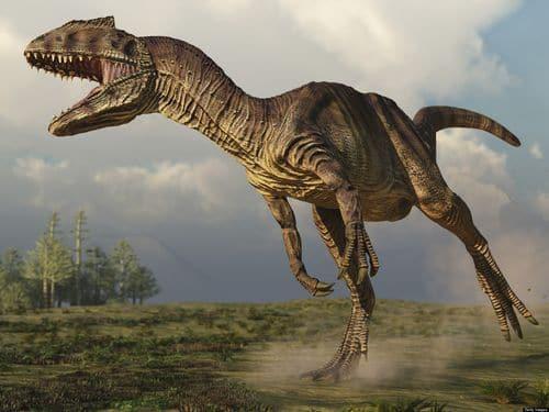 Un dinosaure Allosaure, un terrible carnivore.
