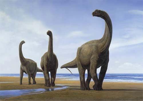 Un groupe de dinosaures Camarasaurus.