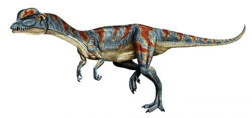 Dilophosaurus est un dinosaure carnivore avec deux grandes crêtes sur la tête, il a été vu dans le film Jurassic Park.