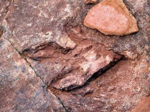 Empreinte de pas fossile de Dilophosaurus (Utah, USA).