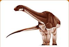 algoasaurus.jpg