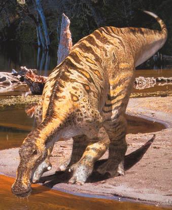 Un dinosaure Anatotitan.