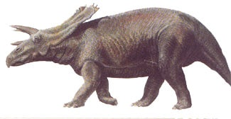 anchiceratops.