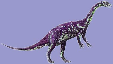 anchisaurus.