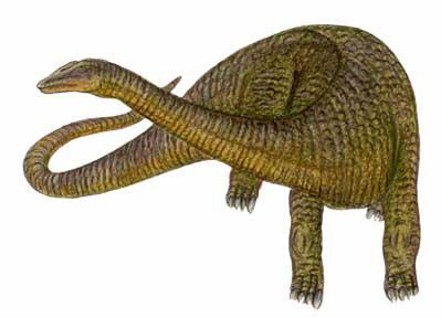 Apatosaurus.
