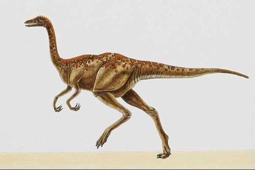 archaeornithomimus.