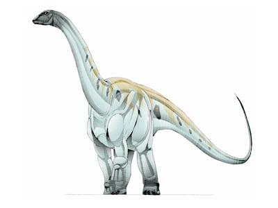 argyrosaurus.